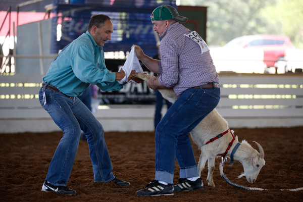 A team rushes to put underpants on a goat during the goat dressing contest at the International Gay Rodeo Association's Rodeo In the Rock in Little Rock, Arkansas, United States April 25, 2015. REUTERS/Lucy Nicholson
